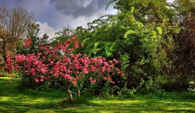 Prydbuske og buske